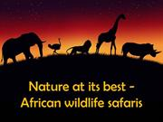 Nature At Its Best - African Wildlife Safaris