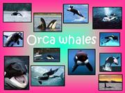 orca_whale_olivia_stacey_and_candice