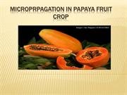 MICROPRPAGATION IN PAPAYA FRUIT  CROP 1