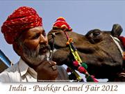 India - Pushkar Camel Fair 2012