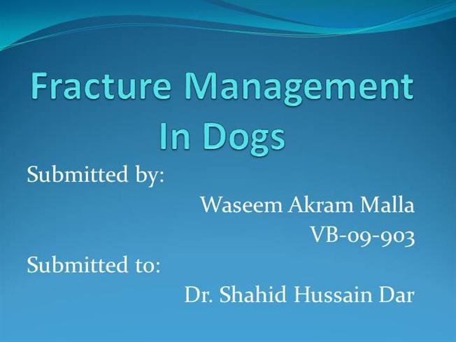 Fracture Management in Dogs |authorSTREAM