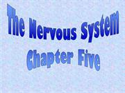 The Nervous System-1