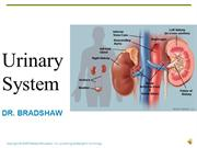 Lecture - Urinary