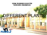 1.Different plants