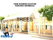 3.Evergreen and deciduous trees