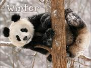 Animals in Winter(1)