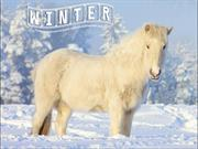 Animals in Winter (2)