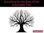 Searching for the Root of the Eukaryotic Tree