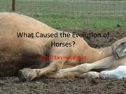 The History and Evolution of the Horse