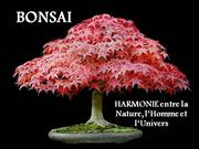 BONSAI. (Pensees de Confucius )