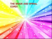 THE BRAIN AND SPINAL CORD!