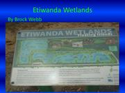 My impression of the Etiwanda Wetlands