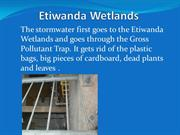 Lots to see at the Etiwanda Wetlands