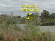 EIWANDA WETLANDS AND THE ISSUES by KRIS