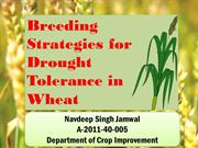 Breeding strategies for drought tolerance in wheat