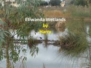 Etiwanda WetLands; a great place to visit by Harry