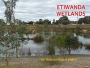 ETIWANDA WETLANDS - A FILTRATION SYSTEM FOR SAVING WATER