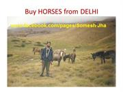 HORSE-Buy HORSES from DELHI