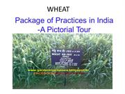 Wheat - Package of Practice India - A pictorial tour