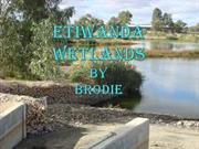 Lots to do at the Etiwanda Wetlands