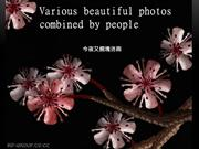 Various beautiful photos combined by people/今夜又擱塊落雨/