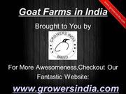 Goat Farms in India