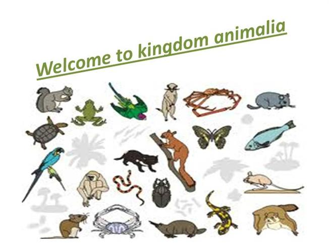 Image of: Diversity Authorstream Kingdom Animalia authorstream