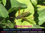 Wasp_Insects_ok_