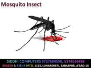 Mosquito_Insects_ok_