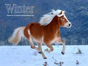 Animals in Winter (4)