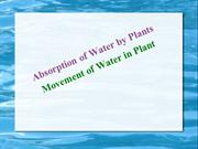 Absorption of water in Plant