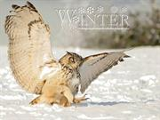 Animals in Winter (5)