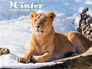 Animals in Winter (6)