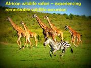 African Wildlife Safari – Experiencing Remarkable Wildlife Excursion