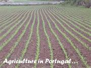 Agriculture in Portugal