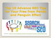 Top 10 Advance SEO Tips for Your Free from Panda and Penguin Effect