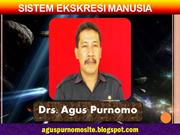 Sistem Ekskresi Pada Manusia
