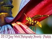 2013 Sony World Photography Awards finalists
