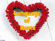 Language of Roses