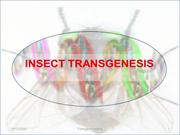 insects transgenesis