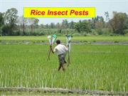 Rice pests
