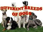english ppt breeds of dogs
