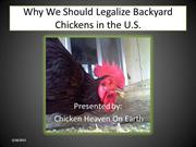 Why We Should Legalize Backyard Chickens in Every City in the U.S.