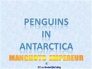 Antartica-Penguins_in_Antarctica-Bob