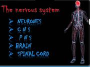 Nervous system K R N
