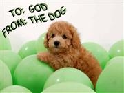 To God From the Dog