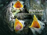 Thrush_Nestlings_Animals_PowerPoint_Templates_And_PowerPoint_Backgroun