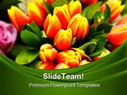Tulip_Flowers_Beauty_PowerPoint_Templates_And_PowerPoint_Backgrounds_p