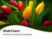 Tulips_Bouquet_Beauty_PowerPoint_Templates_And_PowerPoint_Backgrounds_