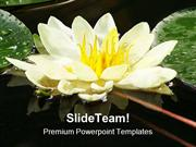 Water_Lily_Nature_PowerPoint_Templates_And_PowerPoint_Backgrounds_ppt_